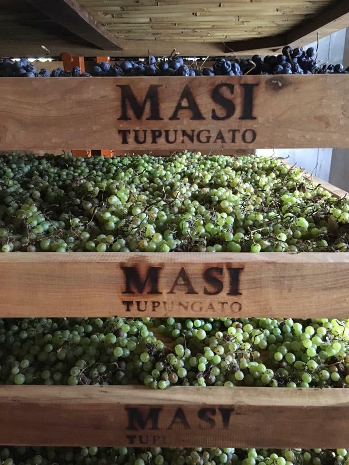 Vignoble Masi à Tupungato