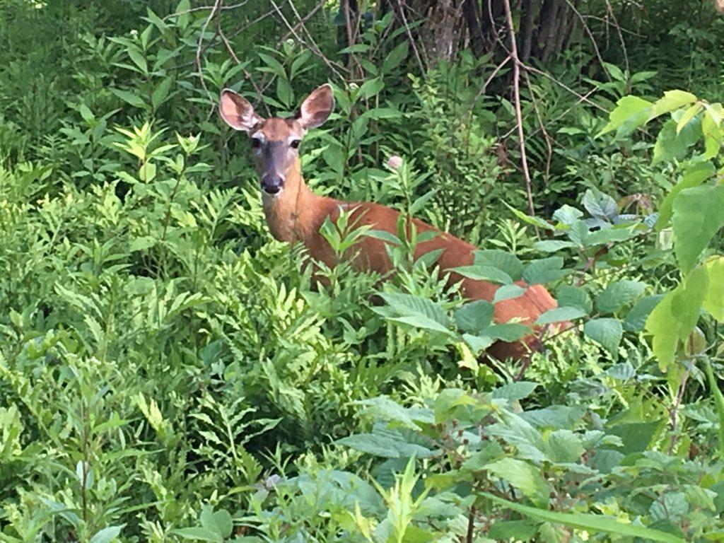 _photo Bambi