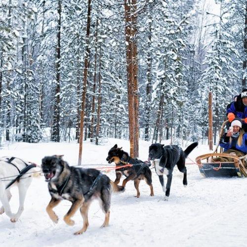 _photo traineau a chiens