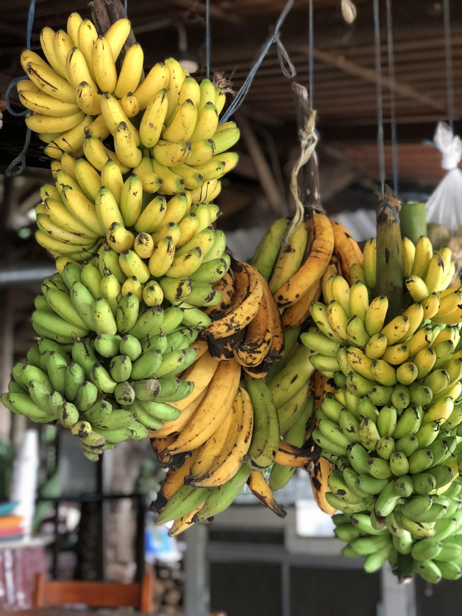 _Photo bananes