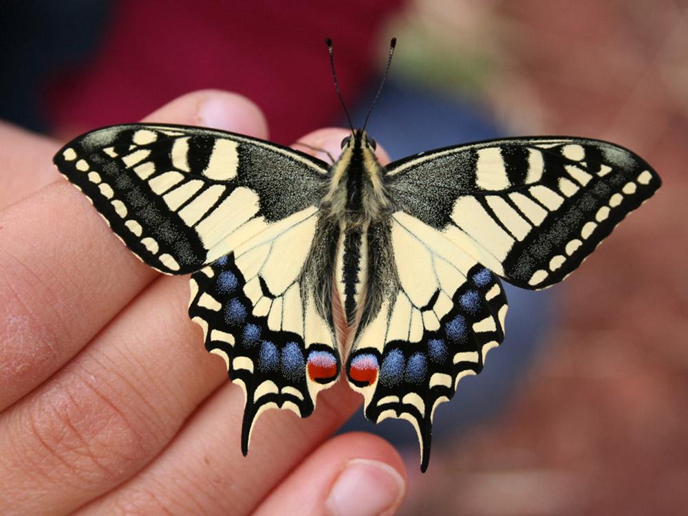 papillon en liberté